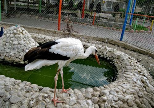 باغ وحش و باغ پرندگان